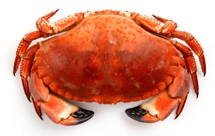 tourteau crustace fruit de mer